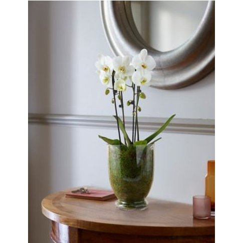 M&S Luxury Orchid In Glass Vase