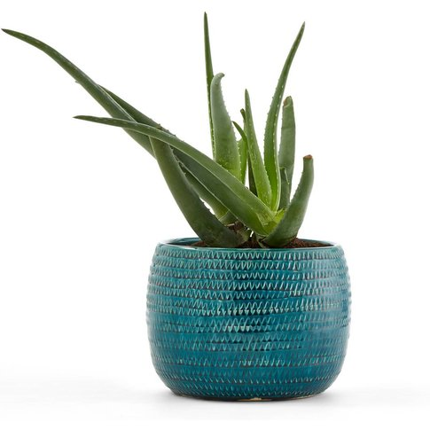 Joanis Plant Pot