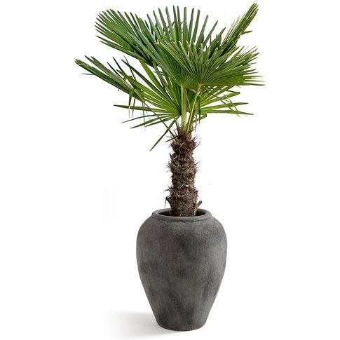 PROCLOS Terracotta Planter
