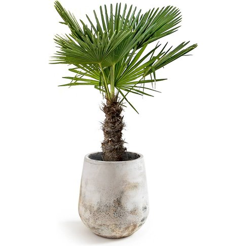 Kikune Plant Pot