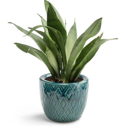 BANGOR Plant Pot