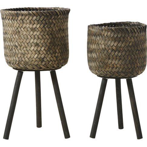 2 Black Pine and Bamboo Planters H66