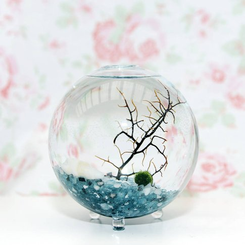 Glass Vase Marimo Moss Ball Terrarium, Green/Grey/Si...