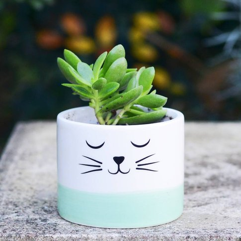 Cat Planter With A Succulent Or Cacti