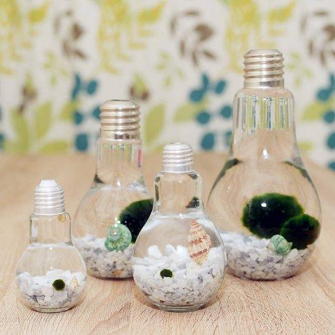 Japanese Marimo Moss Ball Terrarium In Light Bulb Vase