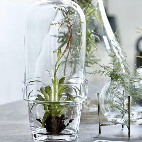 Glass Bell Jar Planter