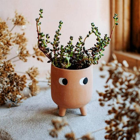 Mini Leggy Terracotta Planter With A Plant