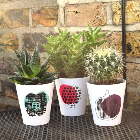 Colourful Herb Plant Pots, Pink/Turquoise/Plum