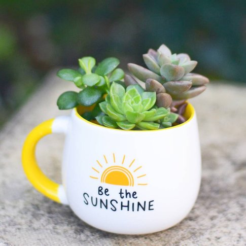 Be The Sunshine Mug Planter With Choices Of Plants