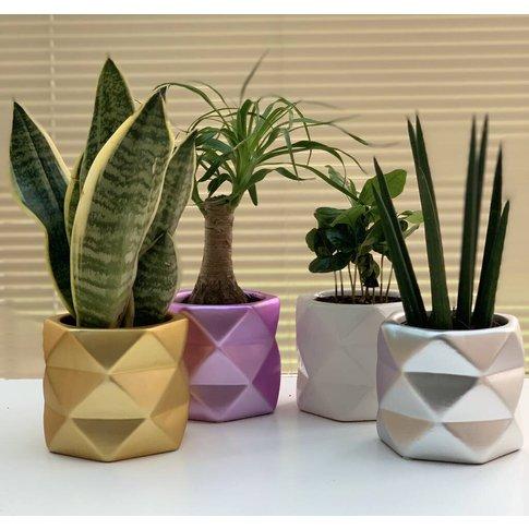 Polygon Planter / House Plant Pot