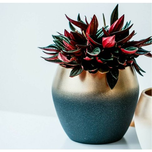 Dark Grey And Gold Ombre Plant Pot