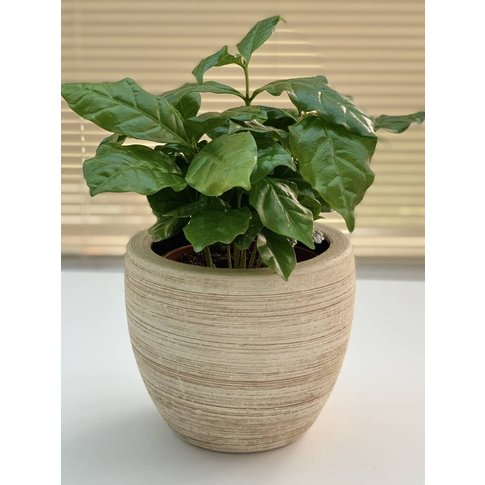 Natural Asymmetric Textured Cream Planter