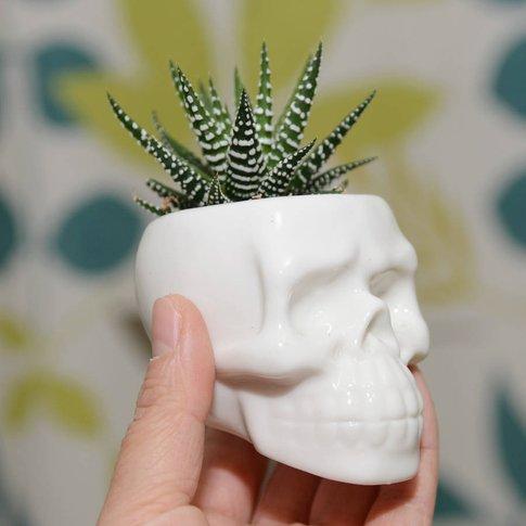 Ceramic Skull Vase Succulent Terrarium