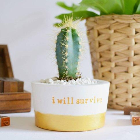 'I Will Survive' Plant Pot
