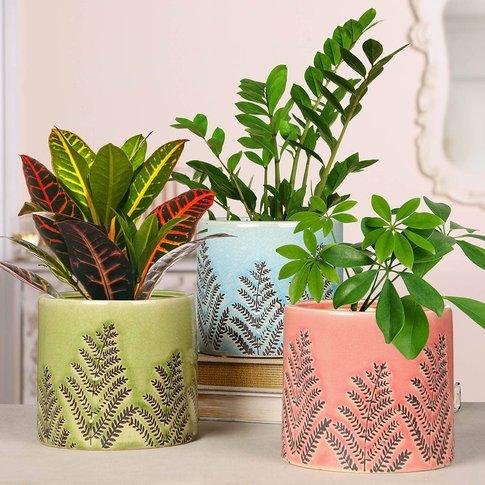 Three Embossed Fern Ceramic Planters
