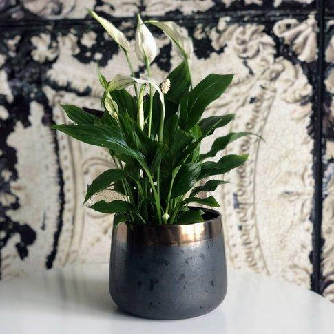 Bronze Shaded Ceramic Indoor Plant Pot