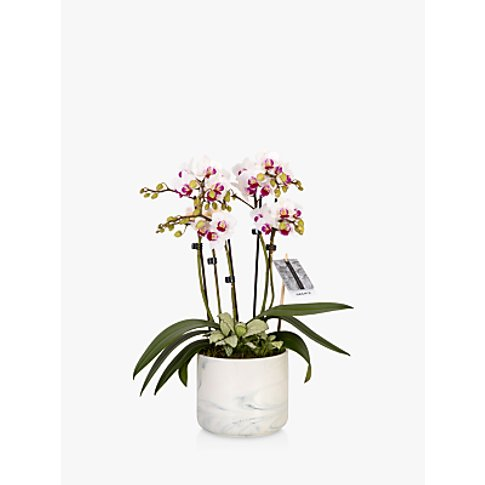 The Little Botanical Marble Orchid And Greenery Planter