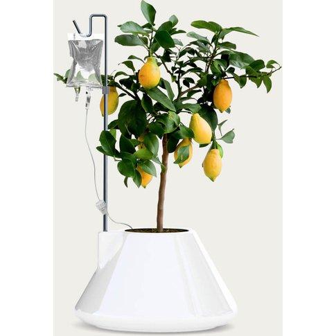 White I.V. Plant Pot