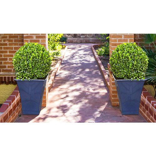 2 Topiary Buxus Plants with Contemporary Planters
