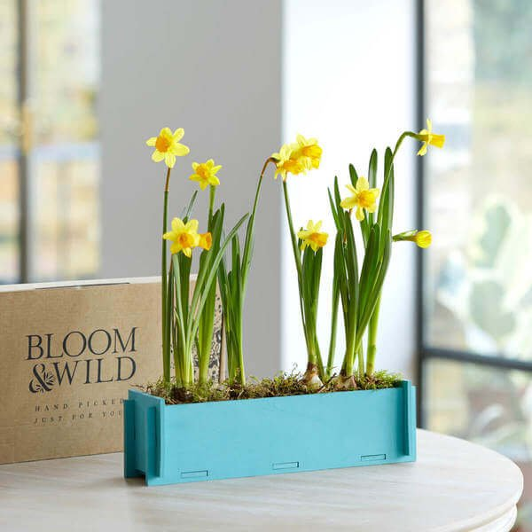 Flower Delivery - Letterbox Flowers - letterbox-flowers - lux-subscription - 30under - letterbox - under30 - stocks - luxletterboxsubscription - new-in - 30plus - etta - letterbox-over-30 - lily-free - letterbox-plants-gift - letterbox-plants-gifts - occasions-thank-you - plants - easter - easter-letterbox - occasions-easter - easter-plants - The Dainty Daffodils