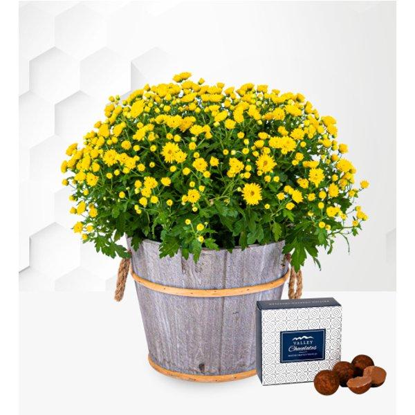 Chrysanthemum Ball - Free Chocs