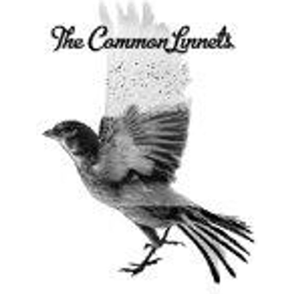 The Common Linnets (569487)