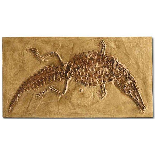Versteinertes Krokodil (Crocodileimus robustus)