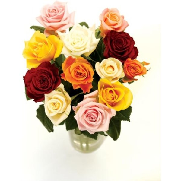 12 Classic Mixed Roses