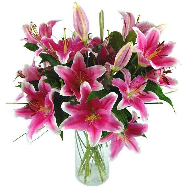 Sensation Lilies