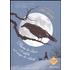 Flavia de Luce e il delitto nel campo dei cetrioli - Alan Bradley