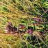 Dr Bach Gentian Bach Flower Remedy 10ml