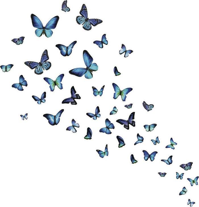Fine Decor Fine Decor Fine Décor 'Mariposa Butterfly' Wall Art Kit