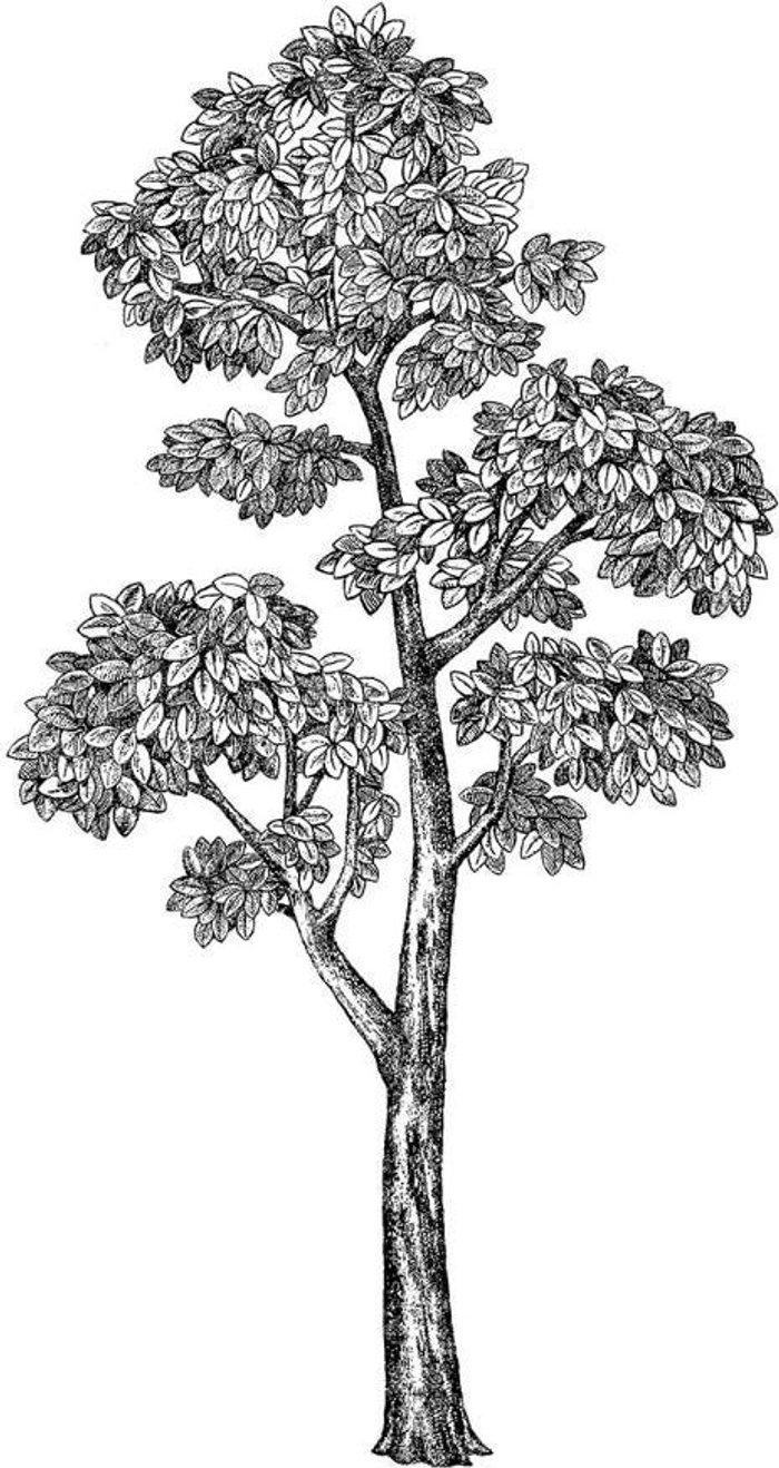 Fine Decor Fine Decor Wall Pops 'Mulberry Tree' Wall Art Kit